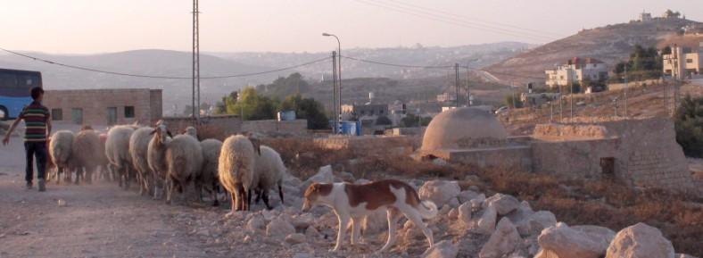 Bethlehem shepherds